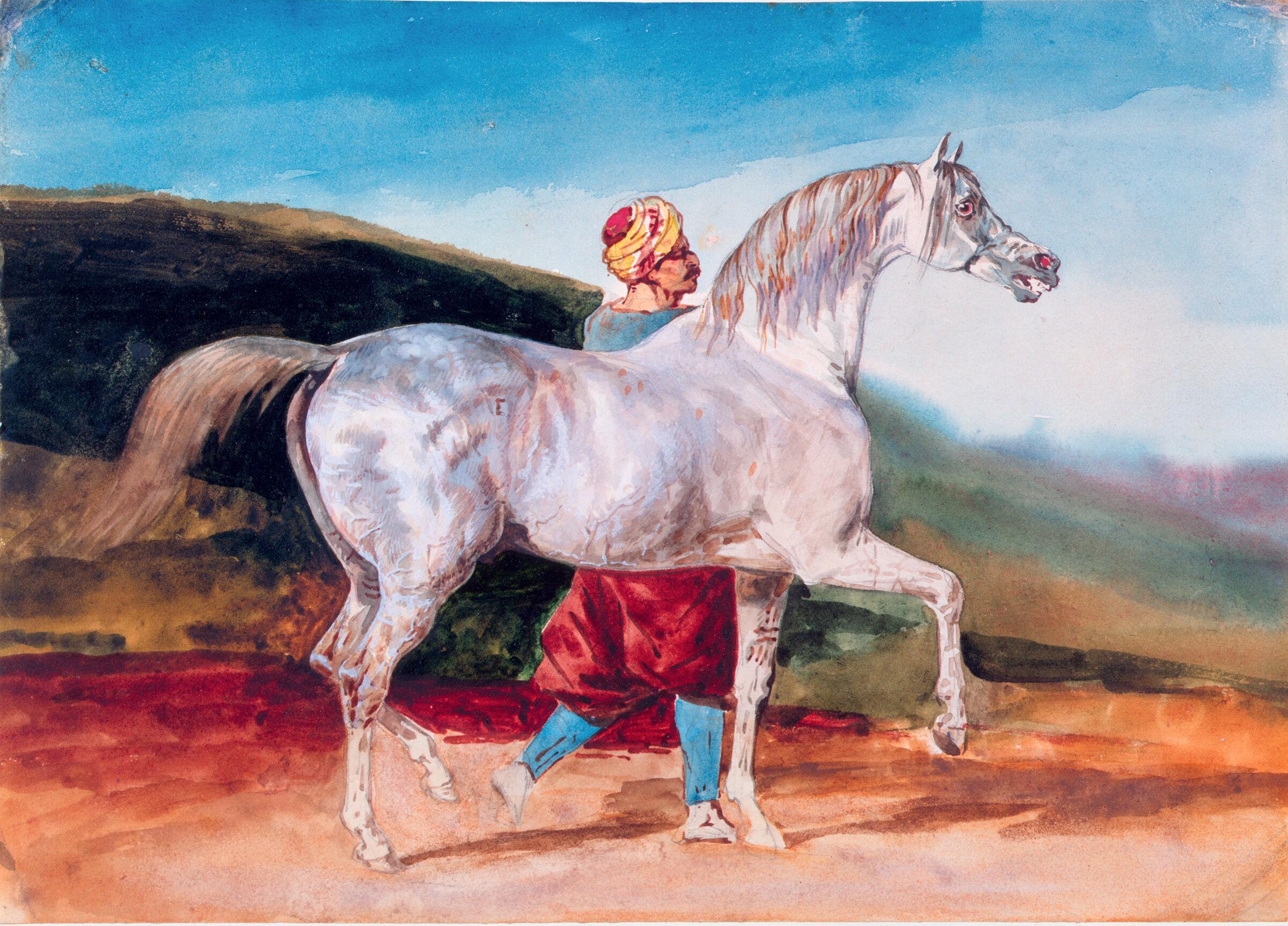 Arabian Gray Led By An Arab