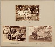 Cultivation Cart