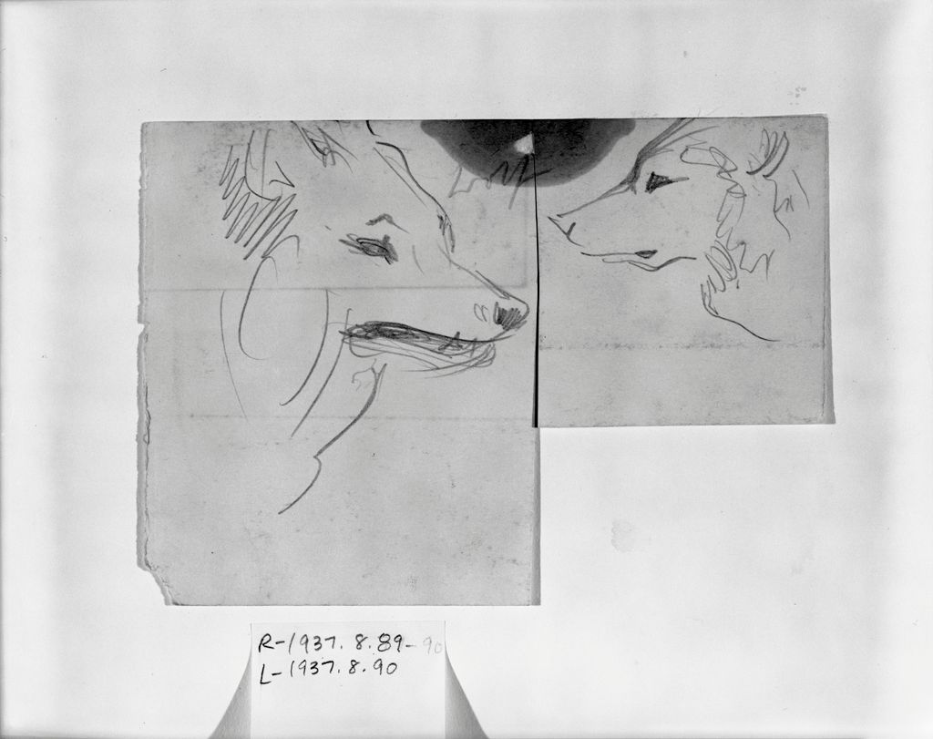 Study Of A Wolf's Head; Verso: Partial Study Of An Ox