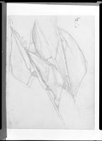 Regimental Standards; Verso: Nude Figure Holding A Helmet