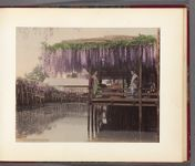 Work 17 of 30 Title: Wisteria tea house, Kameido, Tokyo Date: 188-?