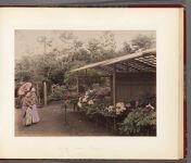 Work 18 of 30 Title: Peony garden, Tokyo Date: ca. 1890