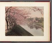 Work 30 of 30 Title: View of Akasaka cherry [trees], Tokyo Date: 188-?