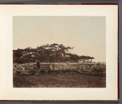 Work 5 of 32 Title: Karasaki, Omi (famous pine tree in Japan... Date: 188-?