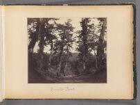 Work 38 of 47 Title: Tocaido road Creator: Beato, Felice Date: 1867?