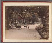 Work 8 of 58 Title: Kasuga at Nara Creator: Ogawa, Kazumasa Date: ca. 1887