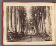 Work 33 of 58 Title: Imaichi, Nikko Road Creator: Kajima, Seibei Date: ca. 1890