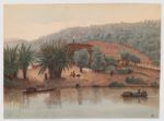 River bank near Pirai, Brazil, June 1865. olvwork307884