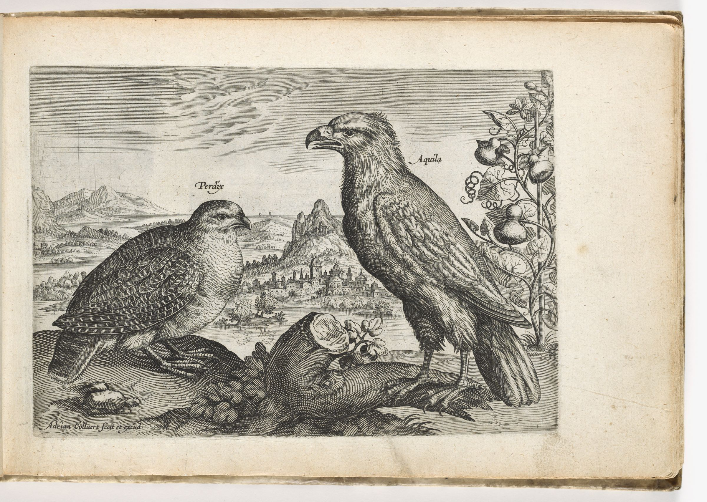 Partridge And Eagle