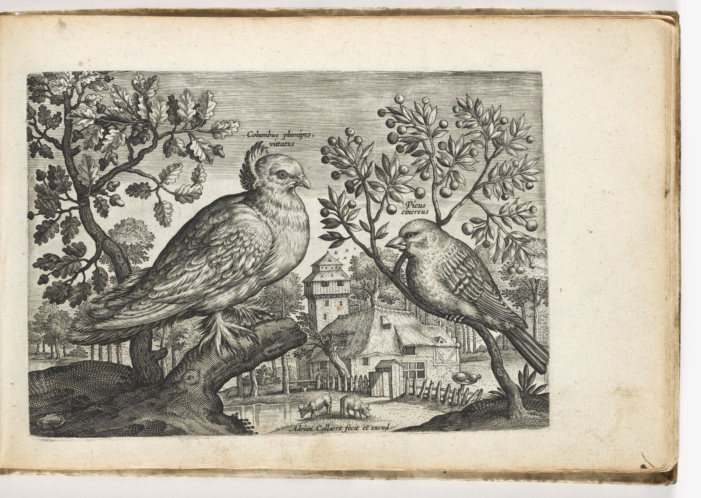 Dove And Finch