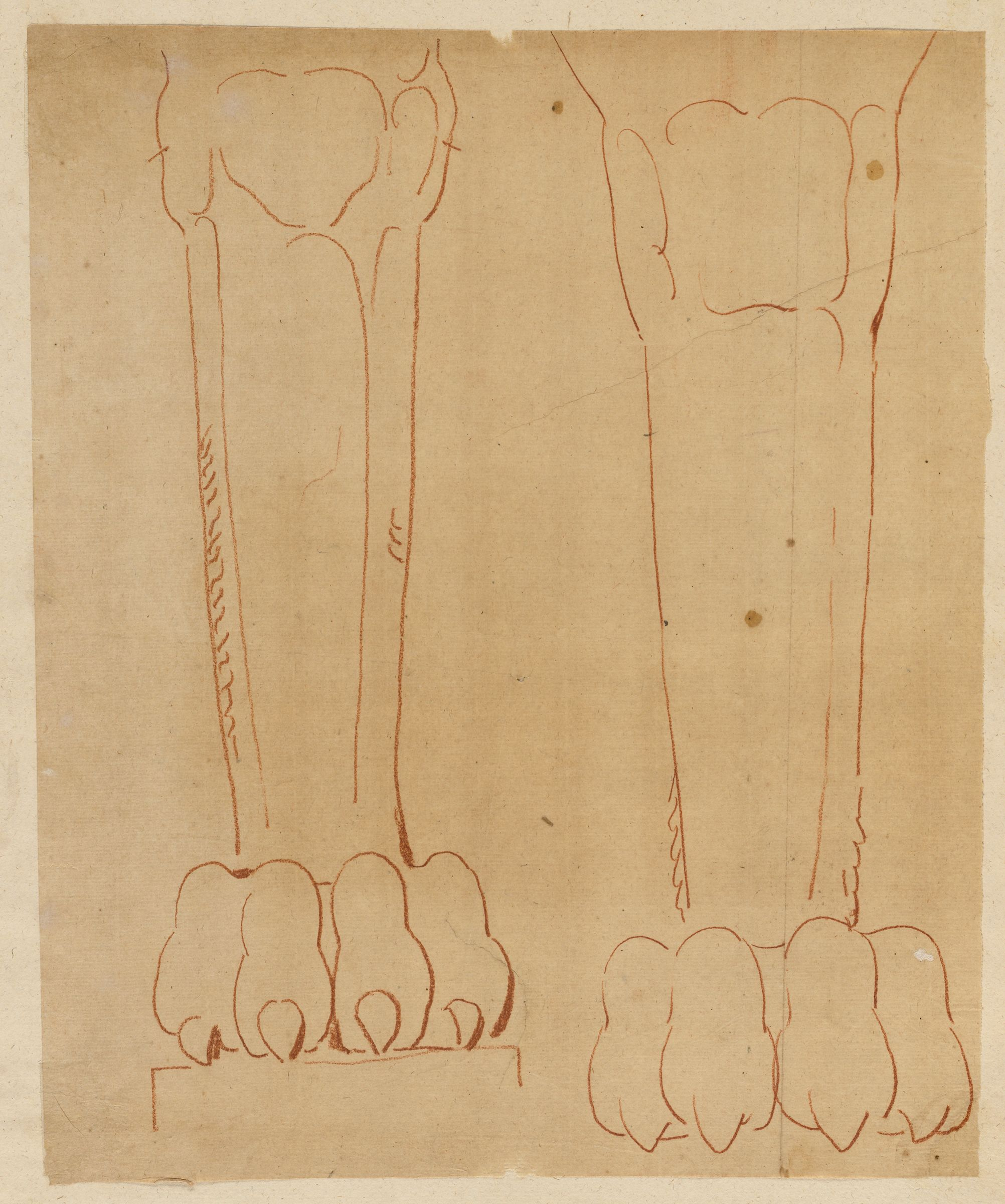 Two Studies Of The Leg And Paw Of A Lion Term