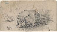 Sheet of Studies, including a Skull