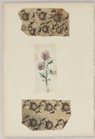 Folio 45 From An Album Of Drawings And Paintings: Three Sheets With Floral Drawings (Recto); Blank Page (Verso)
