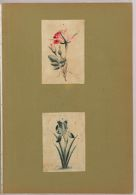 Folio 56 from an Album of Artists' Drawings from Qajar Iran: Bird and floral design for a pen box (recto); Two sheets: Study of a rose; Study of an iris (verso)