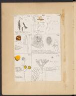 Roland Thaxter sketch book
