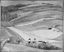 Farm Workers In A Field