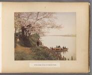 Work 8 of 50 Title: Scene Sumida River at Mukojima, Tokio Creator: Kusakabe, Kimbei Date: 188-?