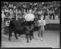 Untitled (Young Girl Posed With Cow And Man In Arena With Audience Watching At 4-H Event)
