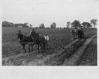 Untitled (corn harvest, central Ohio)