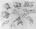 Studies Of A Cat; Verso: Study Of A Horse's Hoof