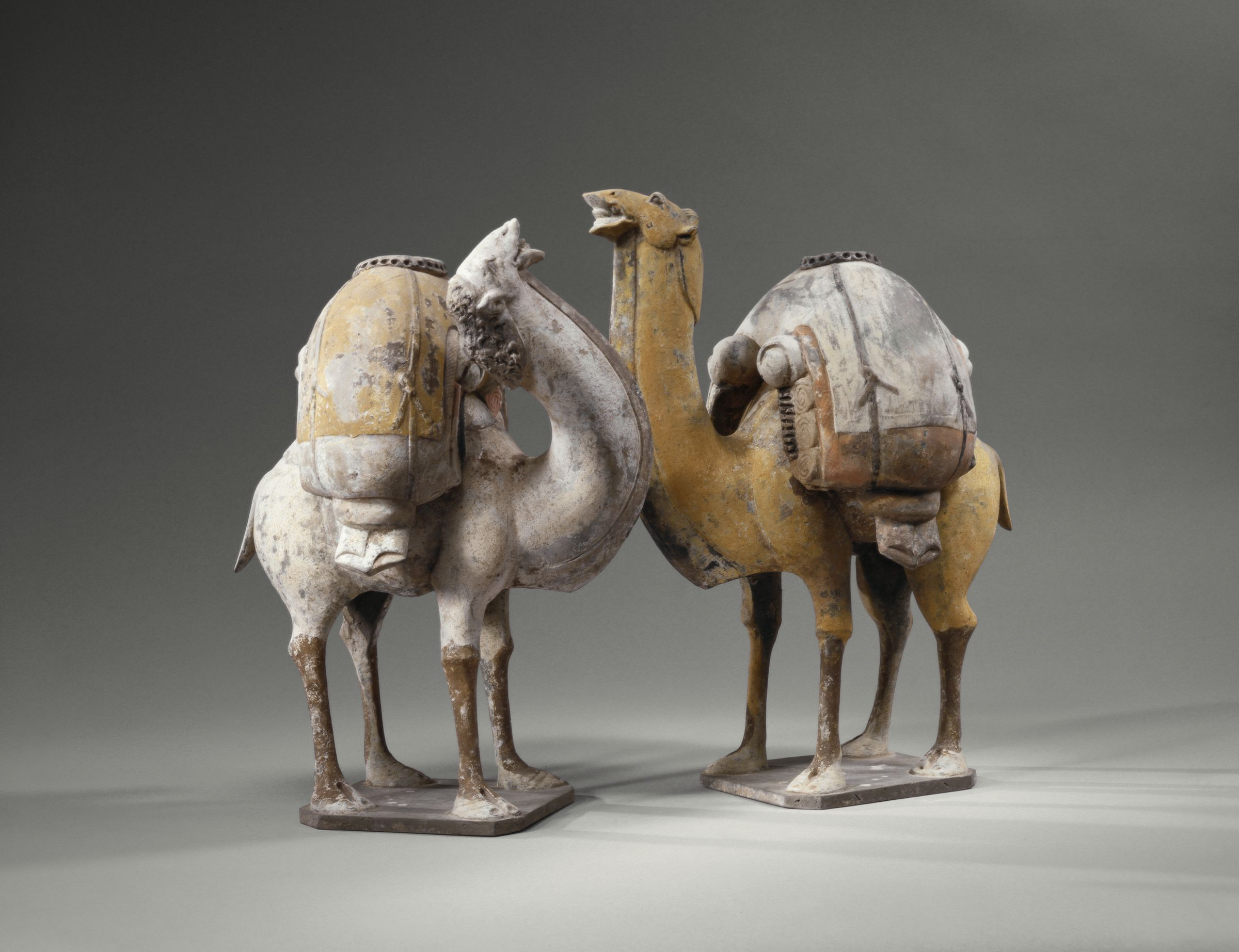 Two Standing, Braying Camels, One Buff, One White, Their Backs Laden With Goods
