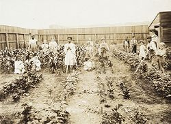 """Education, General: United States. Rhode Island. Providence. School Gardens: School Gardens, Rhode Island. Providence, R.I. """"Portuguese Mission Garden"""", Gano St. In 1910 at time of planting and 6 weeks after planting..   Social Museum Collection"""