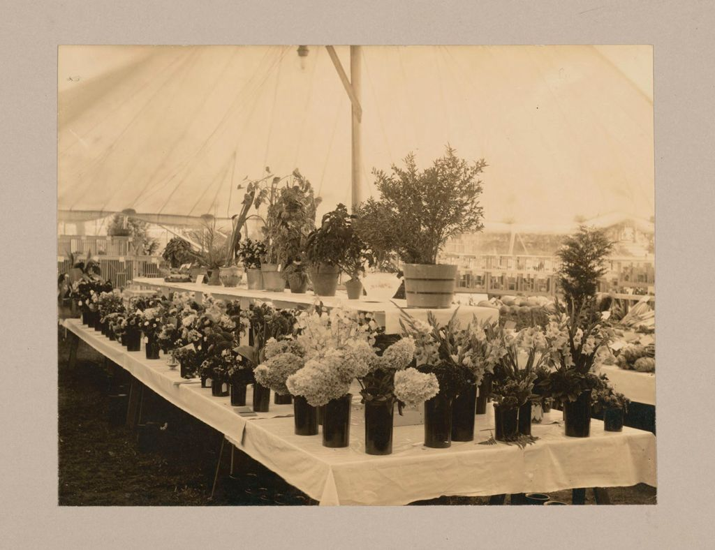 Industrial Problems, Welfare Work: United States. Massachusetts. North Plymouth. Plymouth Cordage Company: Plymouth Cordage Company, North Plymouth, Mass. Welfare Institutions: Exhibit Of Flowers And Vegetables Grown By The Employees In Their Own Gardens - Plymouth Cordage Co., North Plymouth Mass.