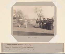 Races, Negroes: United States. Virginia. Hampton. Hampton Normal and Industrial School: Agencies Promoting Assimilation of the Negro: Training for Commercial and Industrial Employment. Hampton Normal and Agricultural Institute, Hampton, Va.: Studying the Cow..   Social Museum Collection