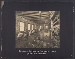 Industrial Problems, Conditions: United States. Pennsylvania. Pittsburgh. Pittsburgh Survey: Tobacco drying in the work room poisons in the air..   Social Museum Collection