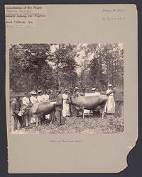 """Social Settlements: United States. Alabama. Calhoun. """"Calhoun Colored School"""": Agencies Promoting Assimilation of the Negro.  Development of Social Standards among the Negroes. Calhoun Colored School, Calhoun, Ala.: Class in Scoring Cows..   Social Museum Collection"""