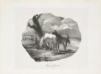 Flemish Horses