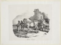 Caux Horse