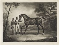 Thoroughbred Stallion with Groom and Trainer