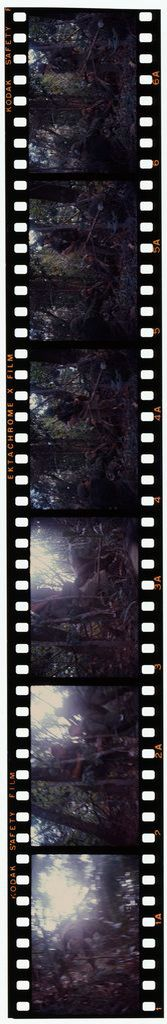 Untitled (Soldiers In Jungle During Fighting In Central Highlands Near Dak To, Vietnam)