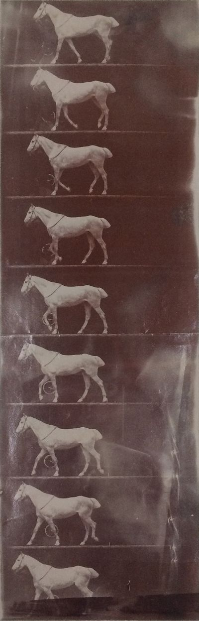 Untitled (Horse (Cob) Walking)