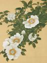 Chinese Roses And Sweetfish