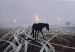 Horse and Tire Tracks