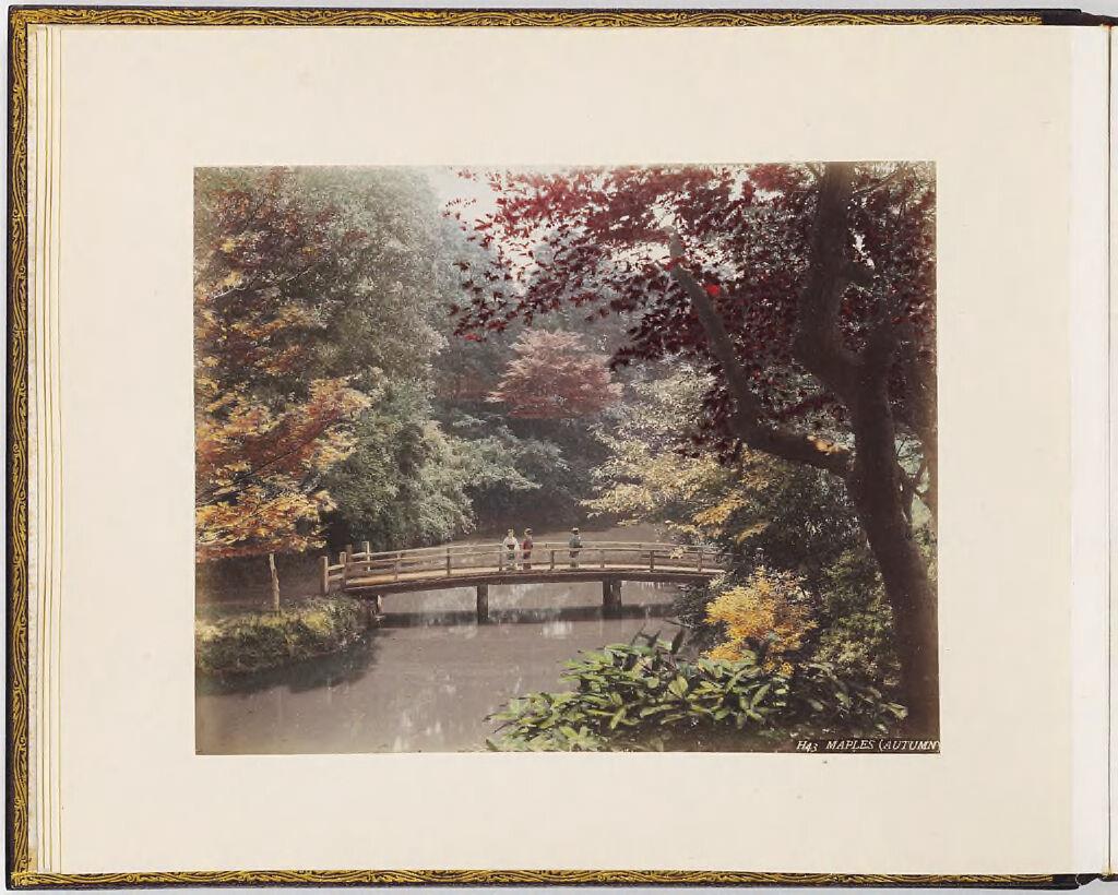 Maples (Autumn)