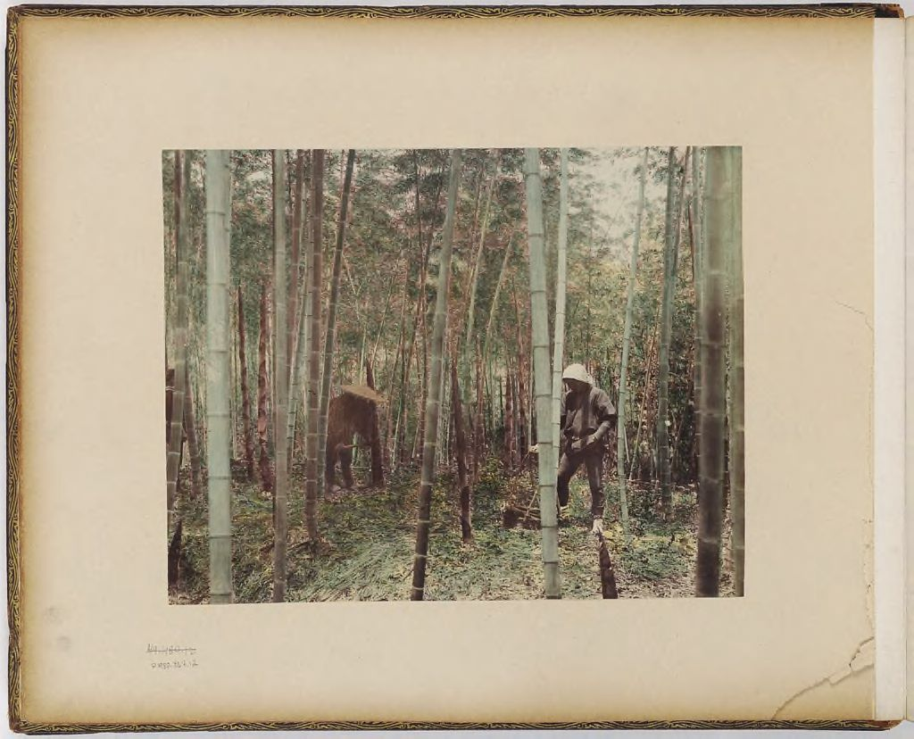 Untitled (Two Men In Bamboo)