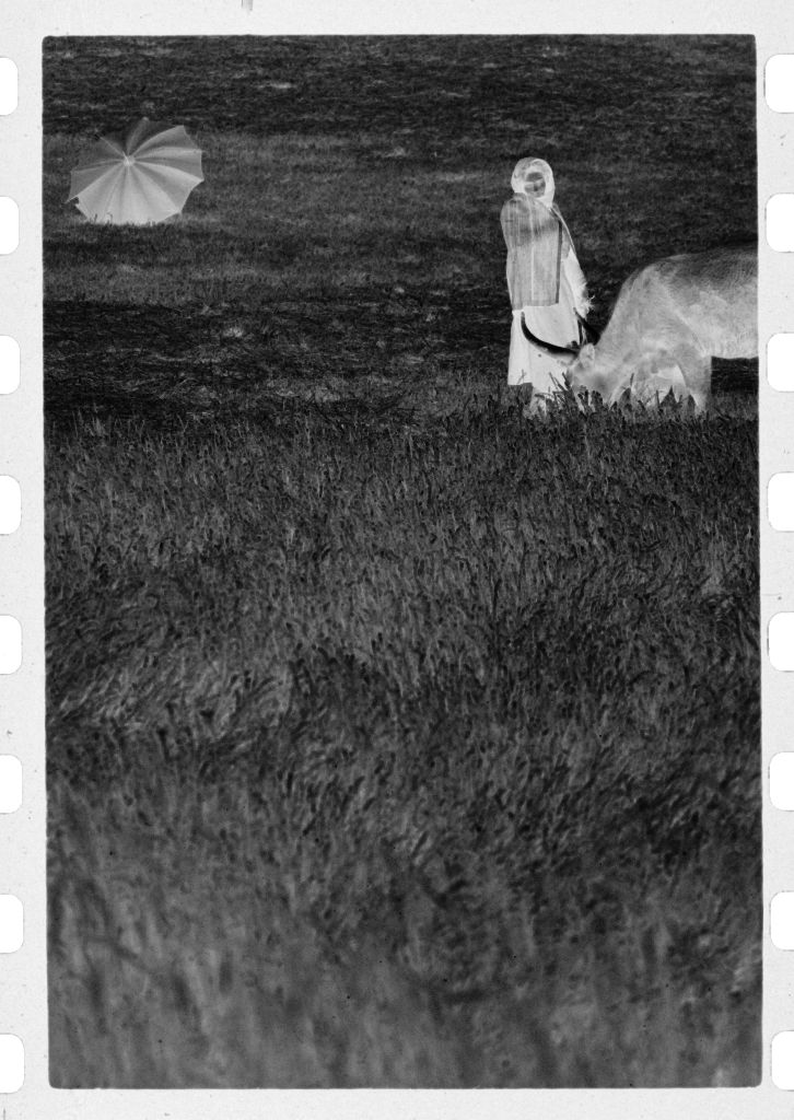 Untitled (Woman With Two Cows In Grassy Field And Open Umbrella In Background, Nazaré, Portugal)