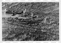 Untitled (Soldiers Standing In Field Near Tail Of Helicopter, Vietnam)