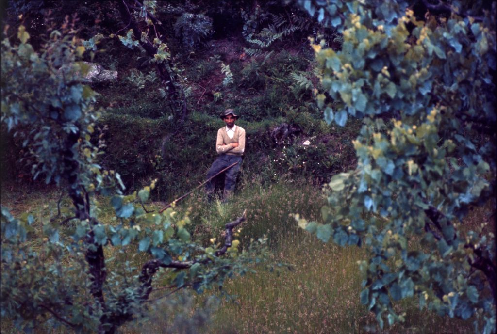 Untitled (Man Wearing Hat Sitting In Grassy Clearing Framed By Two Trees)