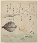 Flower Shells (Hanagai), Ark Shells (Akagai) and Squirting Shells (Shiofukigai), from the series A Set of Shells (Kaizukushi)