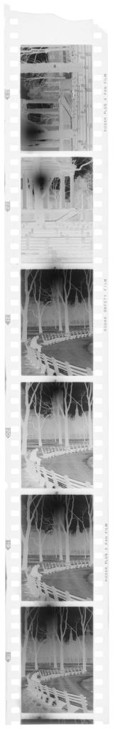 Untitled (Views Of Park)