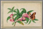 Chinese paintings of flowering plants, hand-colored on rice paper