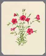 The Italian Flax or Linum, seed from Italy [Linum]