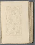 Sphagnum sedoldes, Brid.; Sphagnum pylaesll, Brid.; Sphagnum cyclophylum. Sulliv et Lesqx.