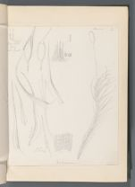 Dicranum [Dicranella brachyblepharis (C.M. Mitt.)]