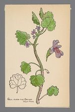 Glechoma hederacea (Gill-over-the-Ground)