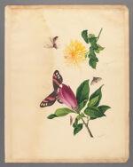 Chrysanthemum and Magnolia